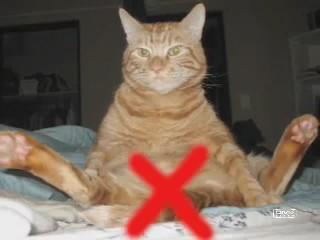 noticiero gatuno gatos humor 4