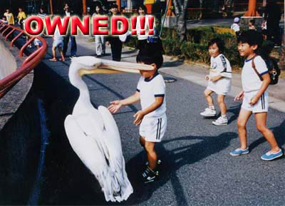 owned-pelicano