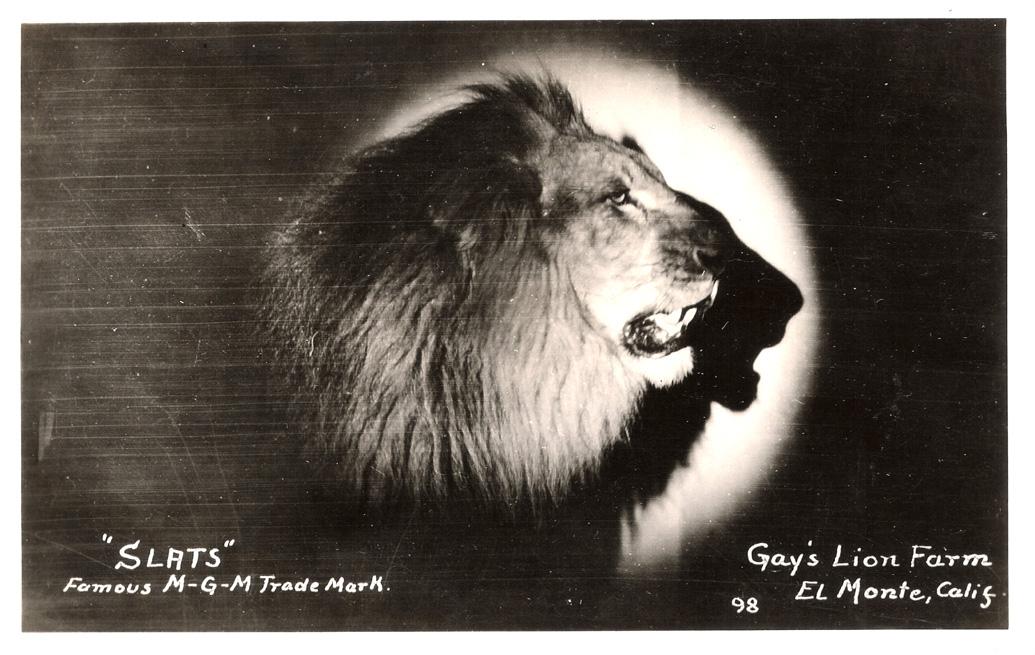 slats MGM primer leon