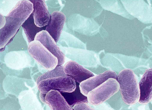 vater-bacterias-germenes-microbios