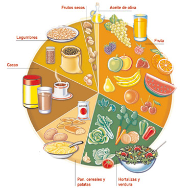 alimentacion sectores grupos alimenticios