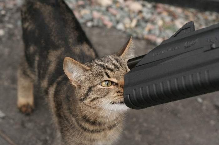 animales-humor-gato