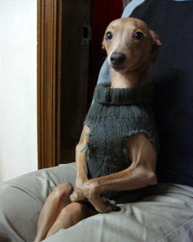 animales-humor-perra