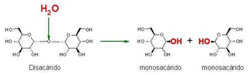 disacaridos monosacaridos azucar glucosa fructosa carbohidrato