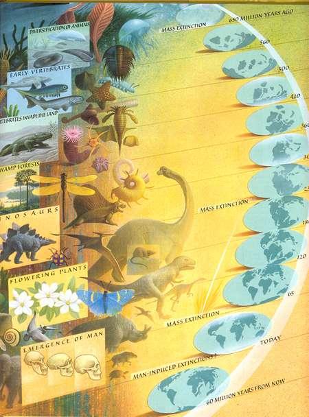 evolucion tierra especies vida animales plantas