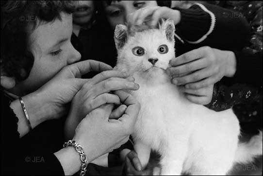 gatos-pocholos-bonitos-juguete