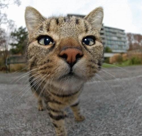 gatos-pocholos-bonitos-morro