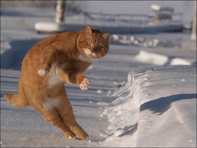 gatos-pocholos-bonitos-nieve