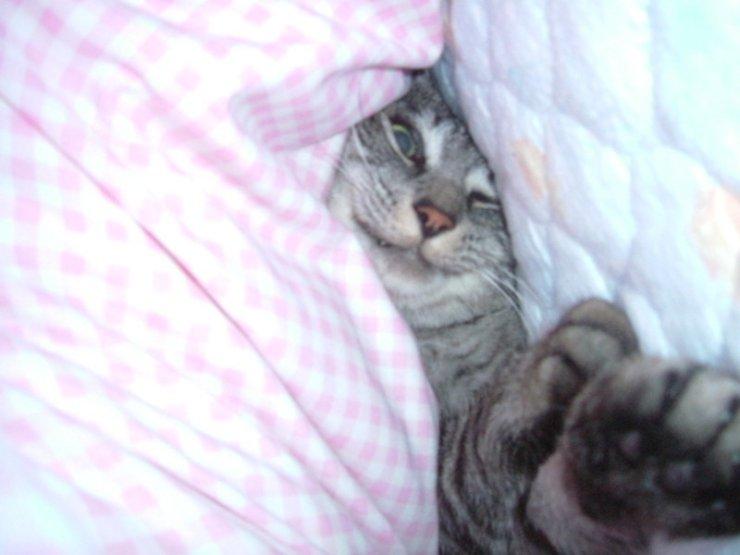 gatos bonitos related keywords - photo #26