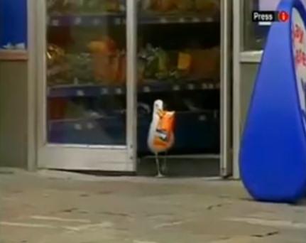 gaviota robando doritos