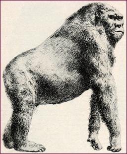 gigantopithecus_giganto-simio-gigante-blackii