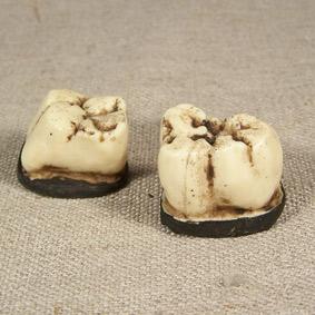 gigantopithecus_giganto-simios-molares