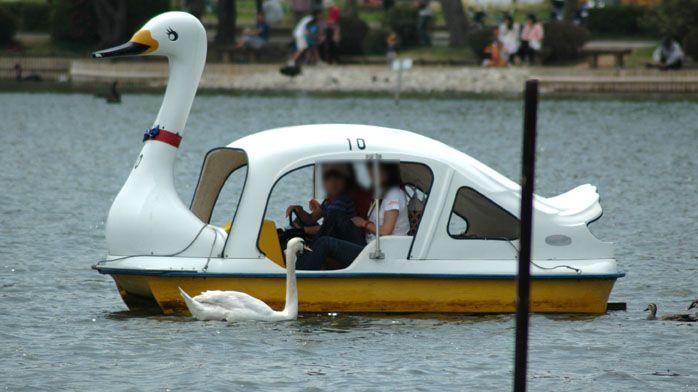 humor animales cisne lago