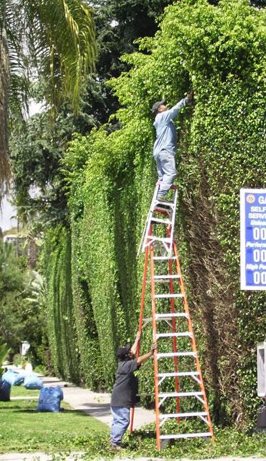 imagenes-internet-curiosas-escaleras-trabajadores
