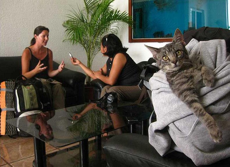 kitty-gato-viajero-gata-viajera