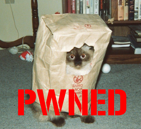 owned pwned_cat gato