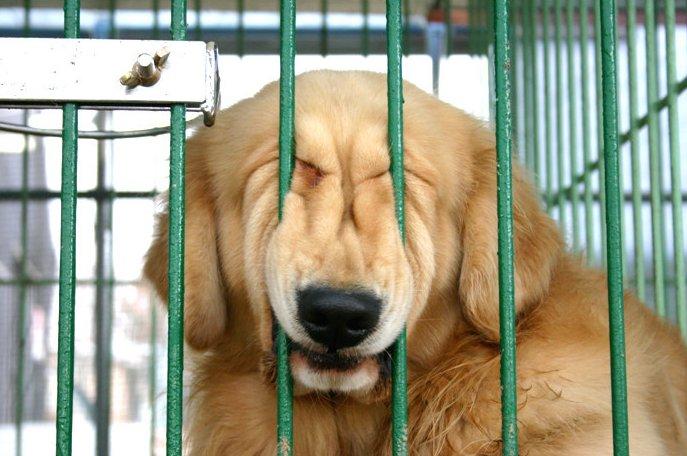 perro jaula humor