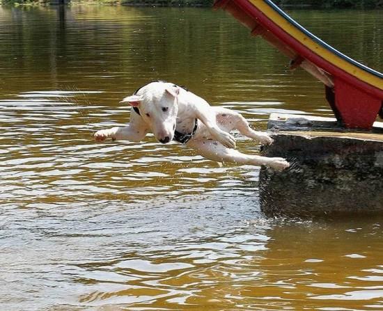 perro lanzandose agua