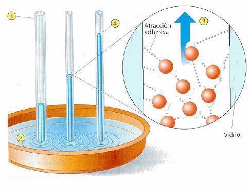 propiedades-fisicas-materia-capilaridad
