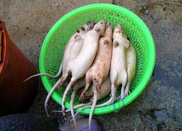 rata-cocinar-receta-1