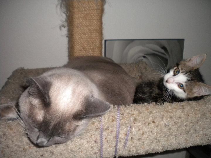 Dr. Jack Schrodinger gatito