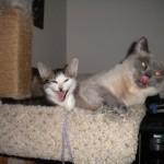 El gato que te saca la lengua