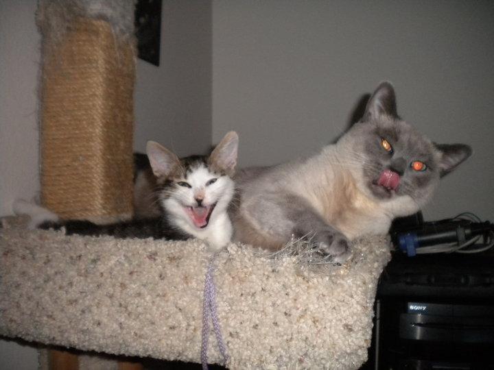 Dr. Jack Schrodinger gatos