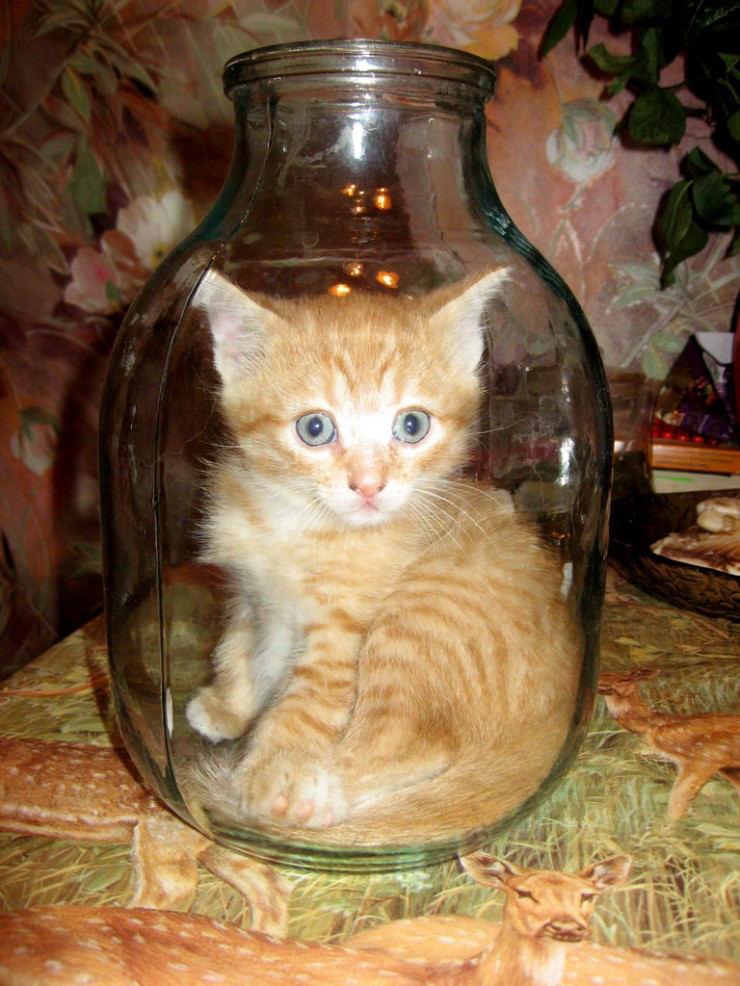 animales-graciosos-gatos-botella
