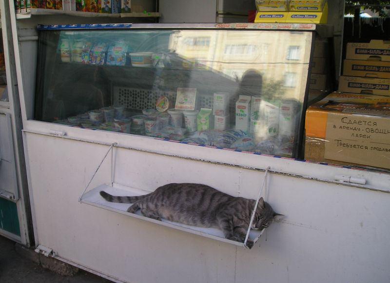 animales-graciosos-gatos-durmiendo