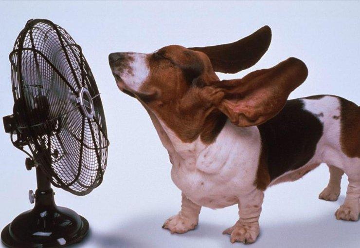 animales-graciosos-perro-ventilador