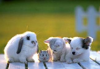 cachorros animales baby animals