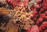 coral-agua-fria-cold-water
