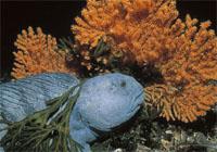 coral-agua-fria-fish-pez