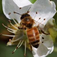 descubrimientos abeja