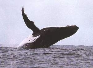 descubrimientos ballena