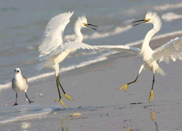 humor-animales-aves-peleando