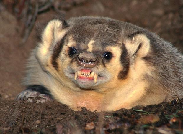 humor-animales-murcielago