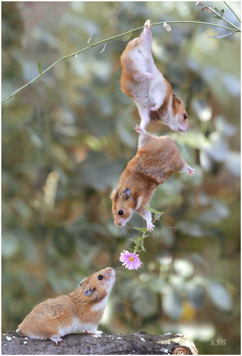 humor-animales-ratoncillos