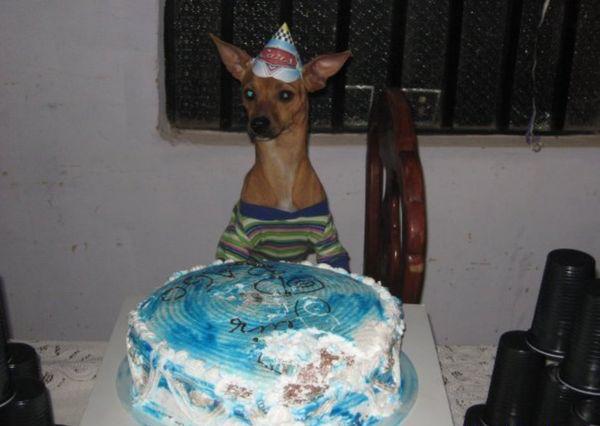 imagenes humor risa tarta perro