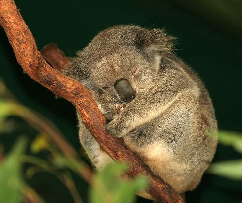 Datos interesantes y curiosos Sobre Animales