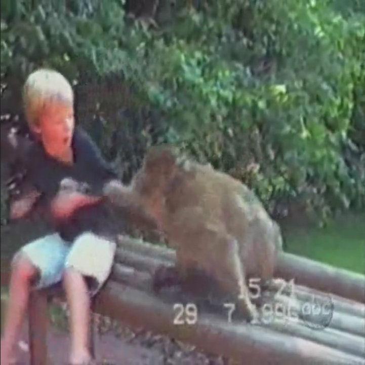 monos cabroncetes humor videos