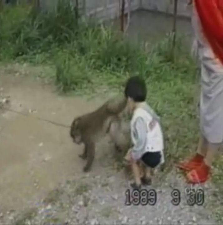 monos gamberros humor videos