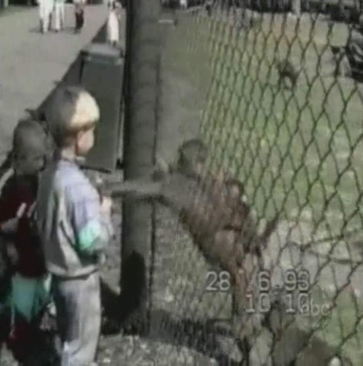 monos malos humor videos