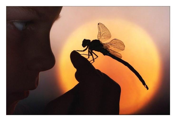 naturaleza-bella-salvaje-libelula-mano