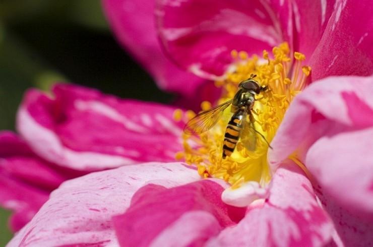 naturaleza-bella-salvaje-mosca-libando