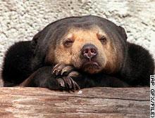 oso-durmiendo-bear-sleeping-tree-arbol-cara