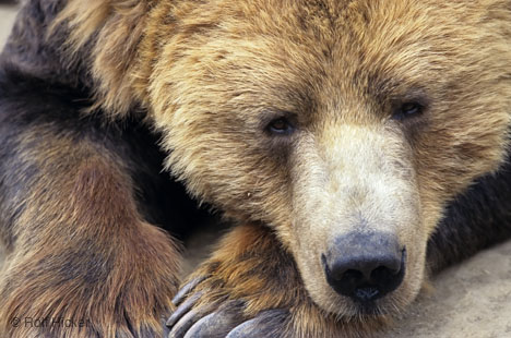 oso-durmiendo-bear-sleeping-tree-arbol-primer-plano