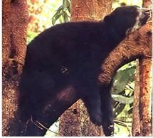 oso-durmiendo-bear-sleeping-tree-arbol