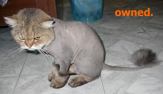 owned-gato afeitado
