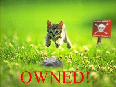 owned gato mina